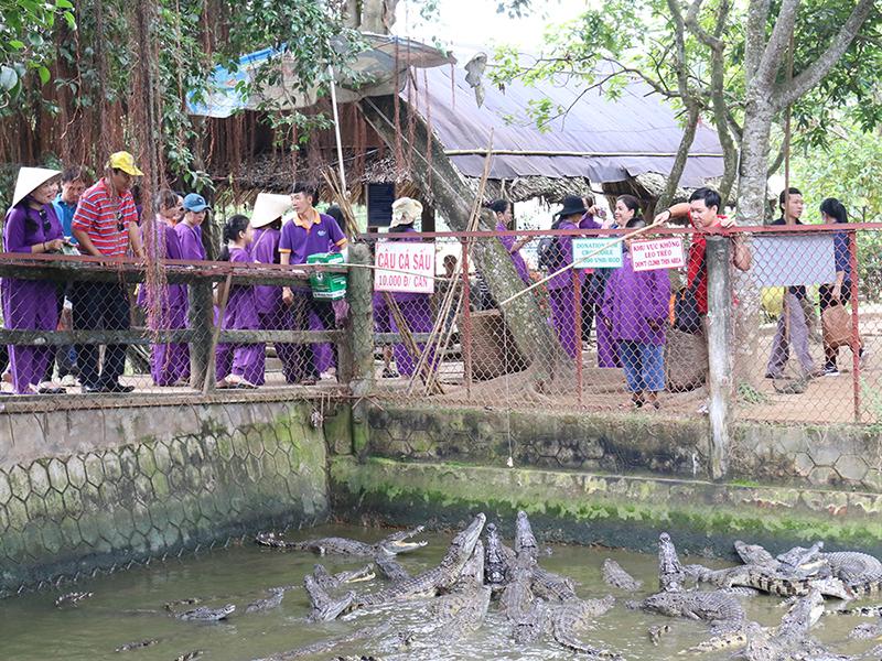 trò chơi câu cá sấu